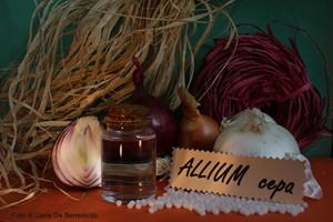 allium-cepa-bassa