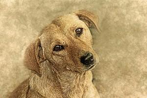 dog-2345876_1920